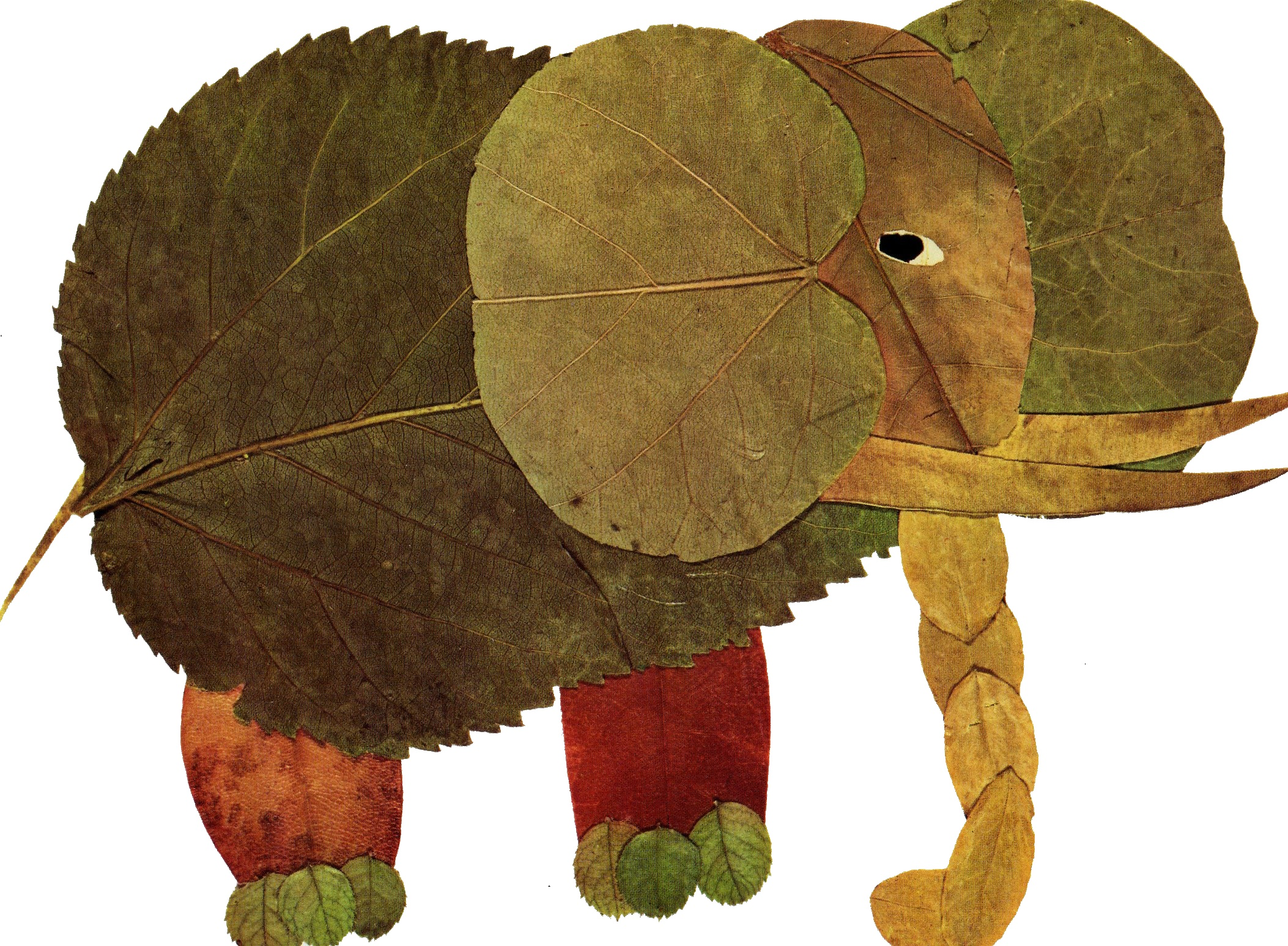 feuilles%20elephant%20grand.jpg